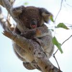 オーストラリアでテント泊してみた 旅するプログラマー カズさんの生存報告(3)