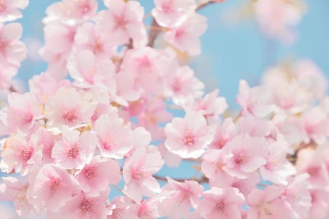 春は新卒入社の季節です。リモートでどう受け入れますか?