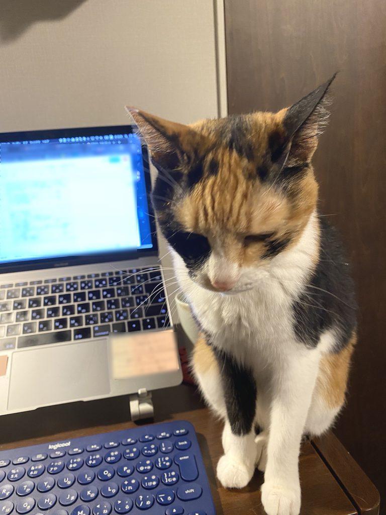 部下の出社を待つ猫上司