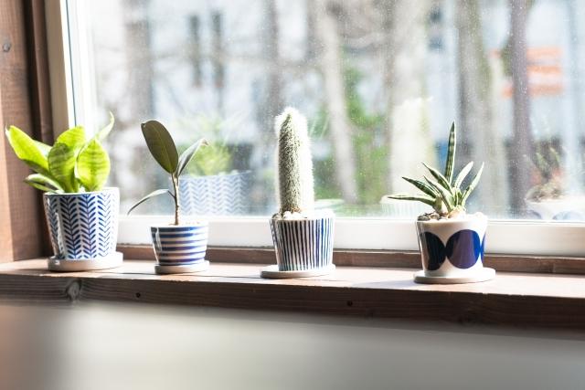 外に出さなくても、日当たりの良い窓際に置いてあげるだけで日光浴になりますよ。